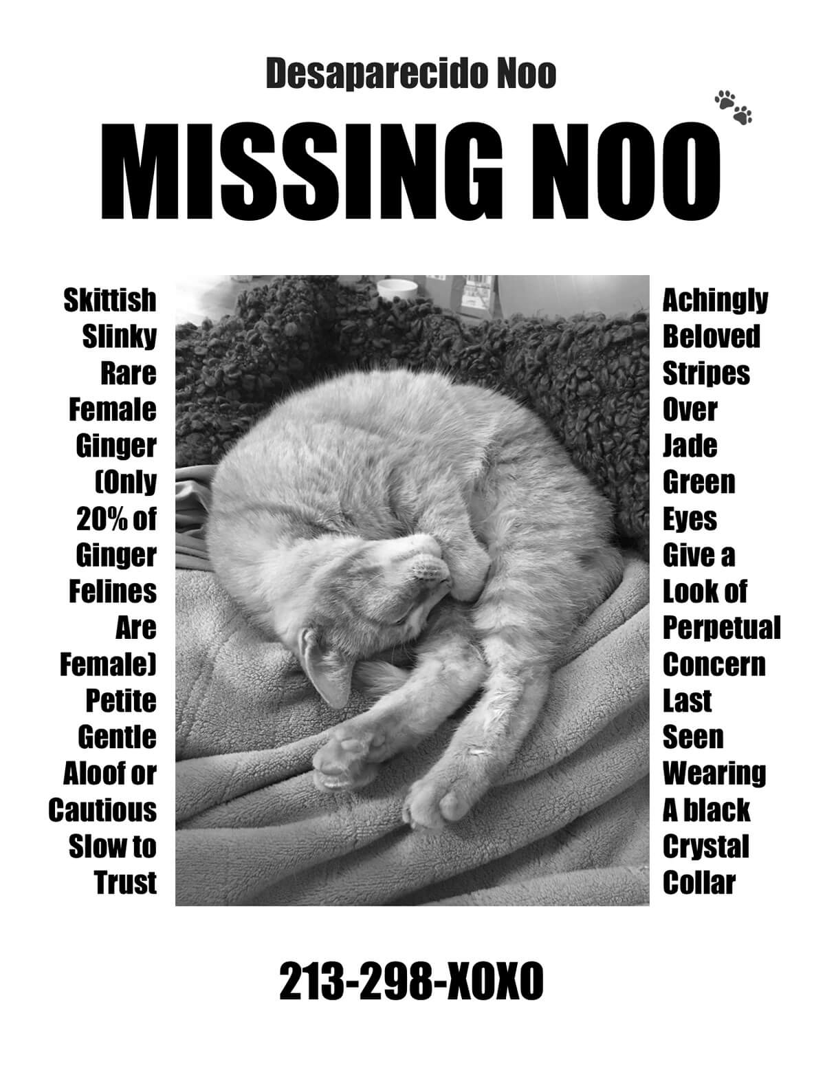 The author's Missing Noo flier.