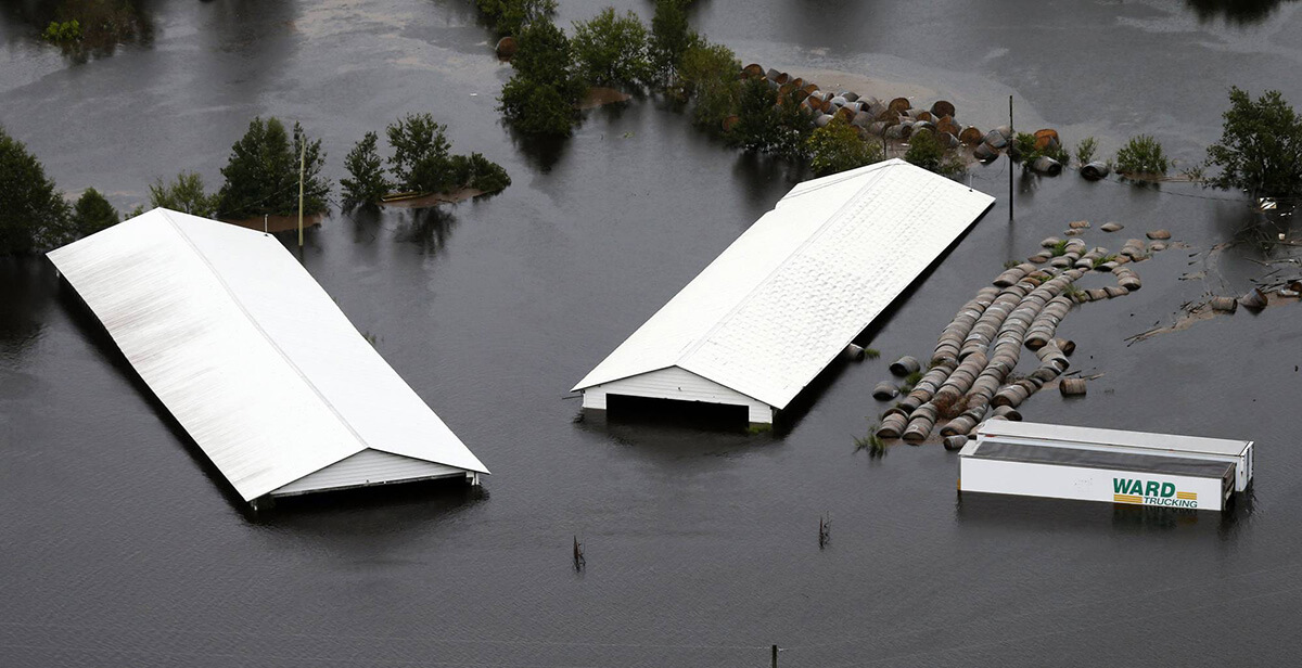 A North Carolina hog farm flooding in September, 2018. Photo: Steve Helber/Associated Press.